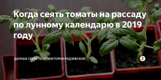 Пикировка томатов по лунному календарю 2021 года: когда пикировать помидоры после всходов с учетом фаз луны и способа выращивания