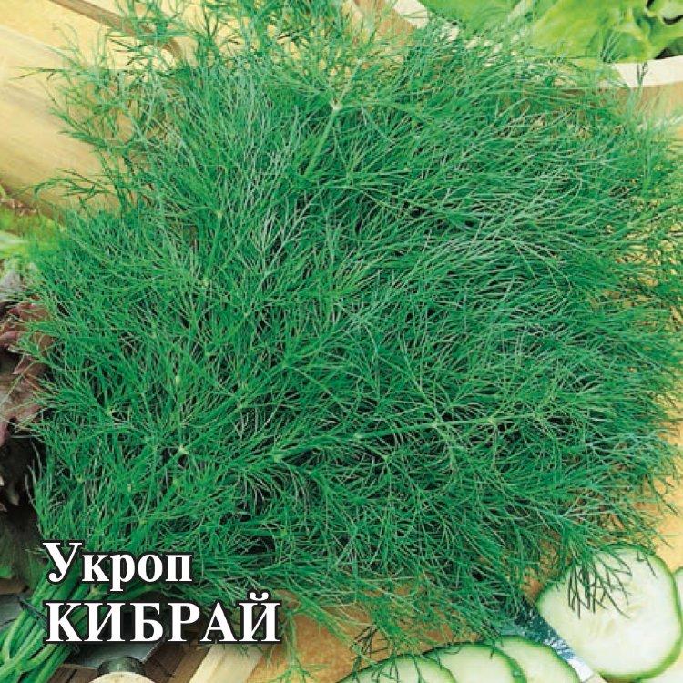 Кустовой укроп: популярные сорта с подробным описанием и фото, особенности выращивания зелени и отзывы