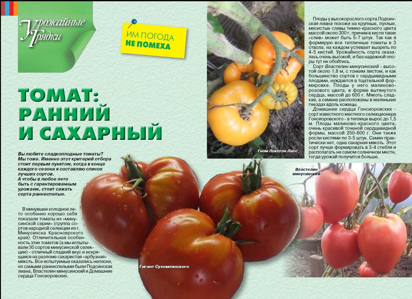 Самые сладкие сорта томатов – обзор