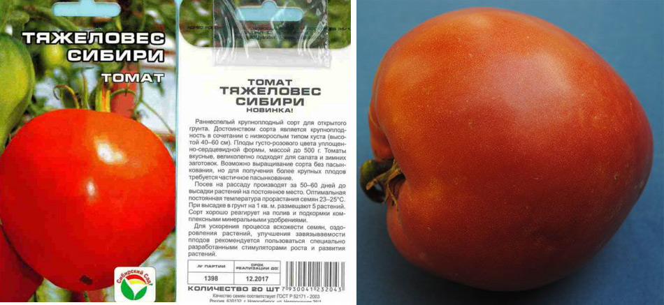 Описание сорта томата букет сибири, его характеристика и урожайность – дачные дела