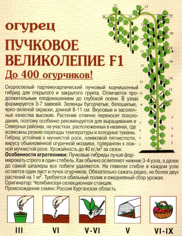 Лучшие гибриды и сорта самоопыляемых (партенокарпических) огурцов для выращивания в теплице и открытом грунте