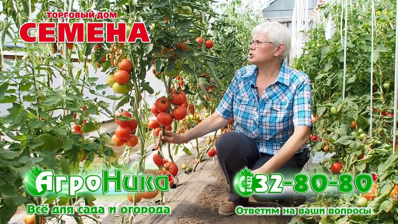 Характеристика и описание гибрида томата евпатор f1, выращивание и уход