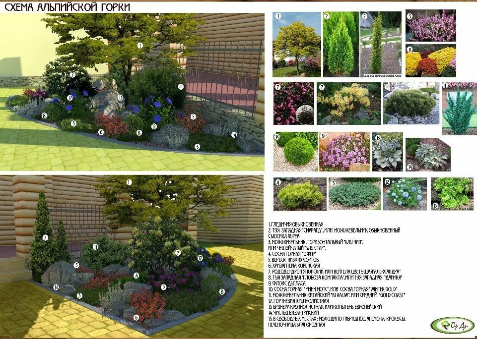 Идеи для сада. примеры композиций из деревьев и кустарников