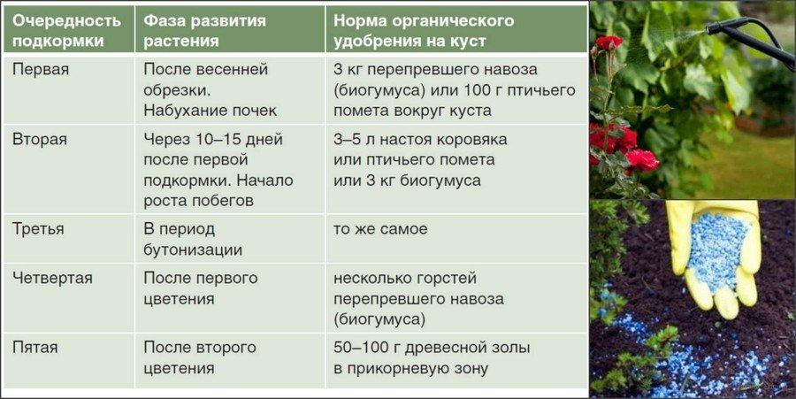 Подкормка роз в течение года: схема, сроки, дозировка