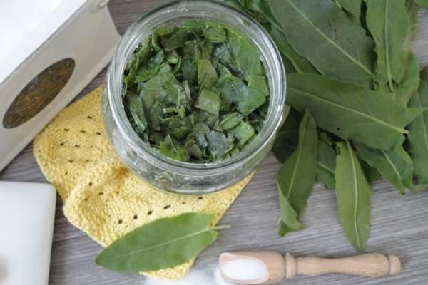 Как сохранить базилик на зиму: как заготовить, заморозить, сушить, консервировать и хранить базилик