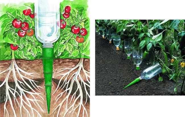 Как сделать капельный полив из пластиковых бутылок для огурцов