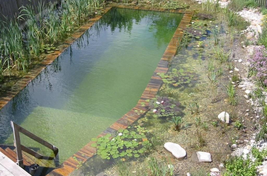 Как очистить искусственный водоём, пруд или бассейн от загрязнений. способы, советы и полезные рекомендации