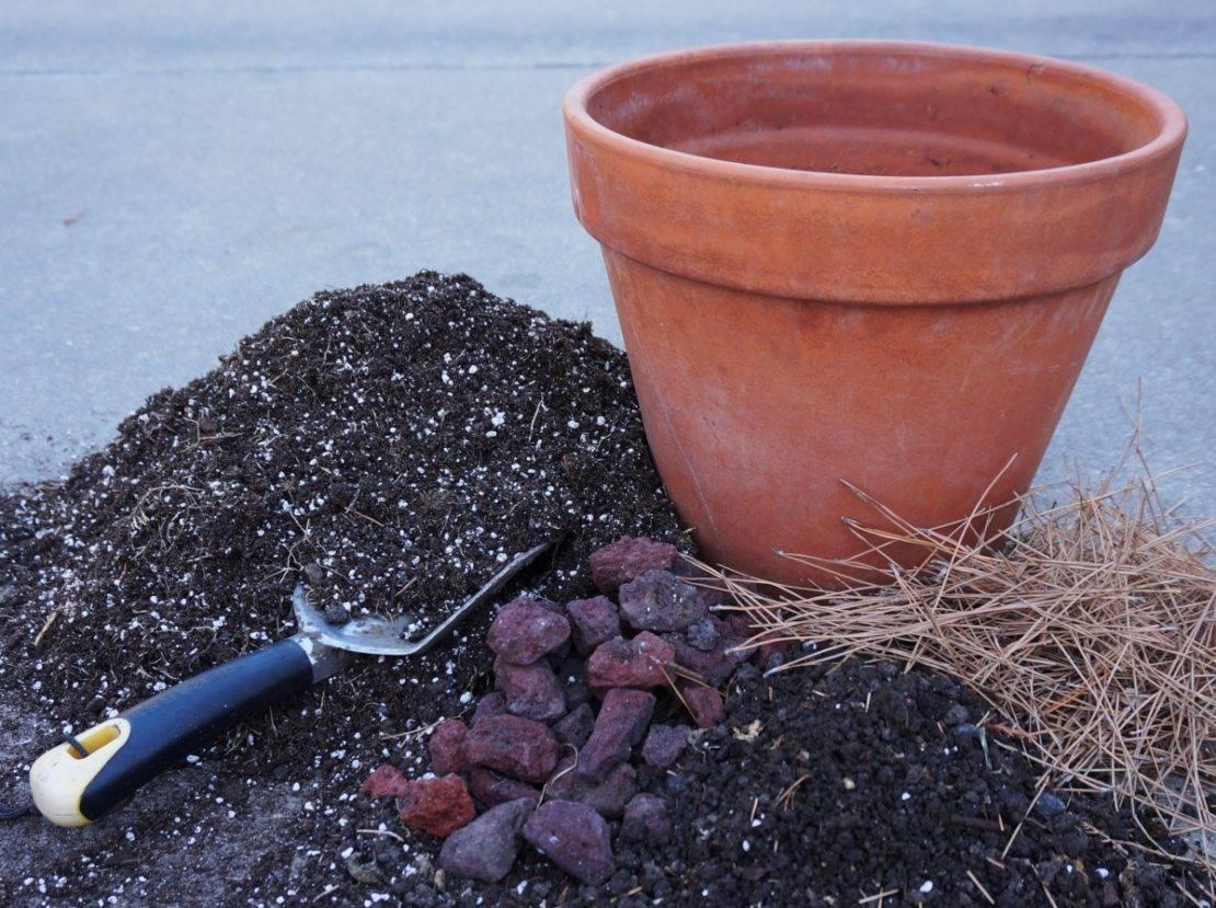 Состав земли для посадки лимона в домашних условиях, как приготовить почву своими руками