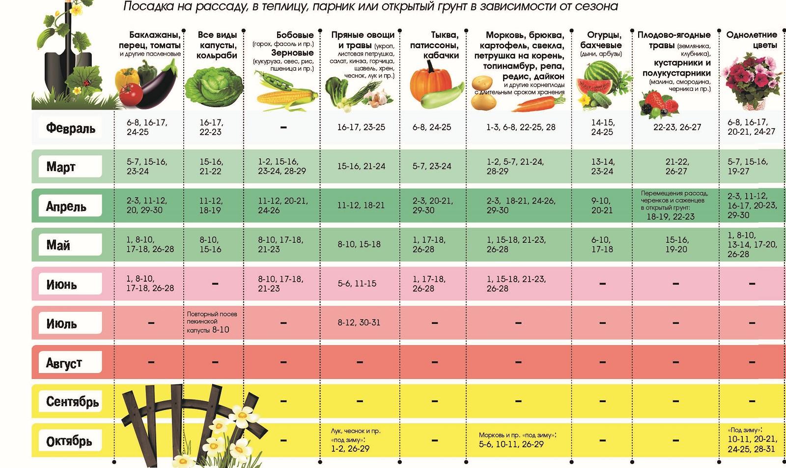 Когда и как сажать помидоры на рассаду в 2021 году по лунному календарю