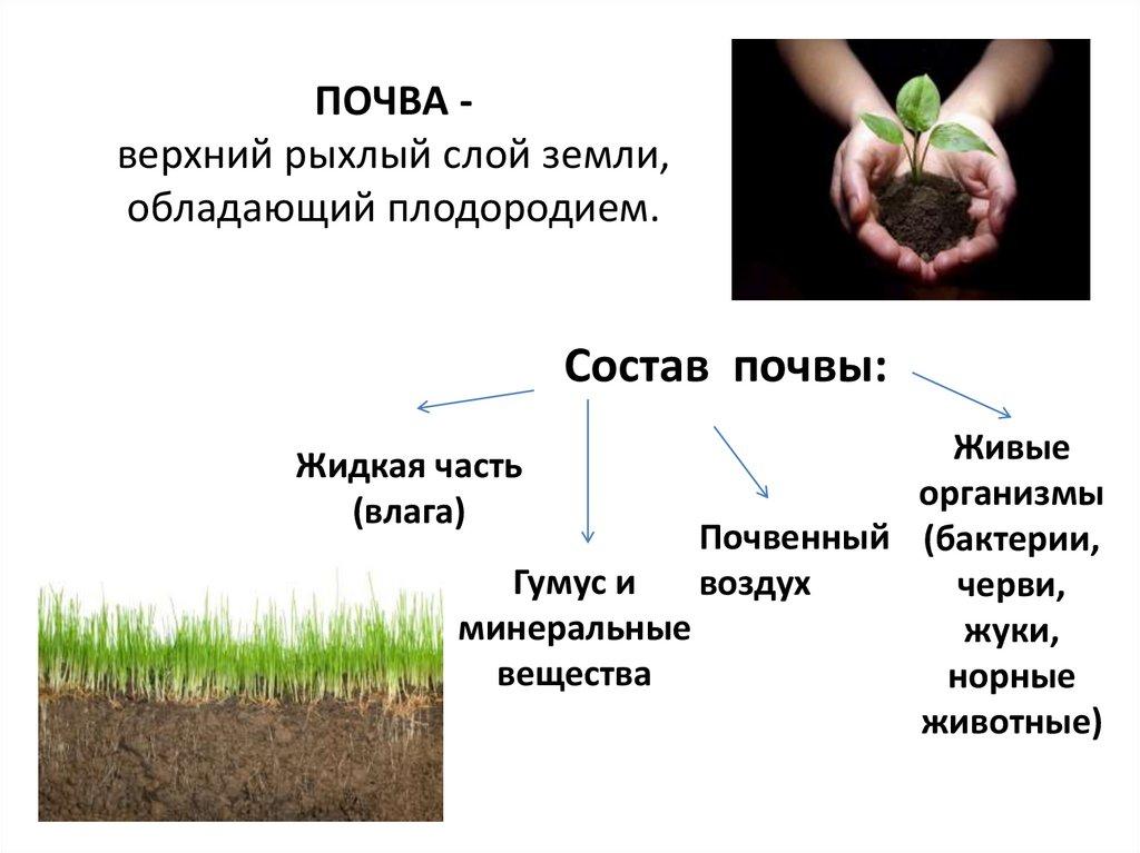 Невидимый «мегаполис»: как живые организмы повышают плодородие почвы