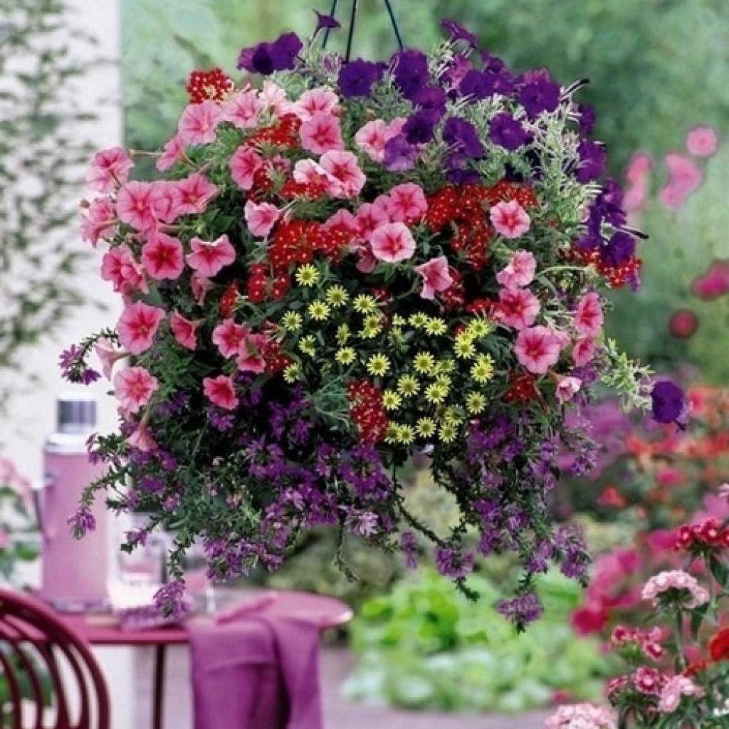 Ампельные растения для сада - фото и названия
