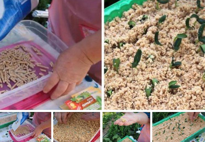 Выращивание рассады огурцов в домашних условиях в стаканчиках, торфяных таблетках, без земли, пошагово с фото
