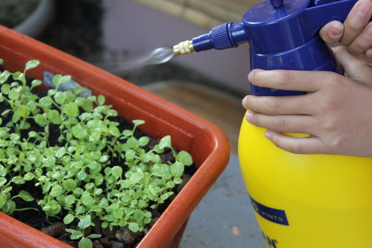Особенности выращивания брусники на дачном участке