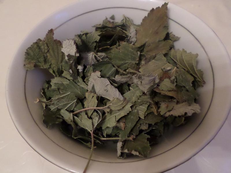 Листья смородины: польза и вред, лечебные свойства
