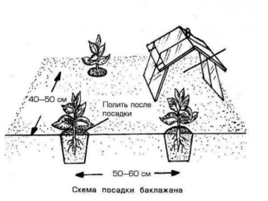 Как правильно формировать перцы в теплице и открытом грунте