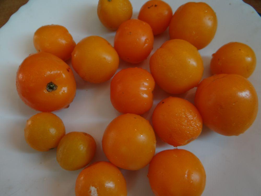 Аппетитный томат мандаринка — подробное описание, детали выращивания, отзывы