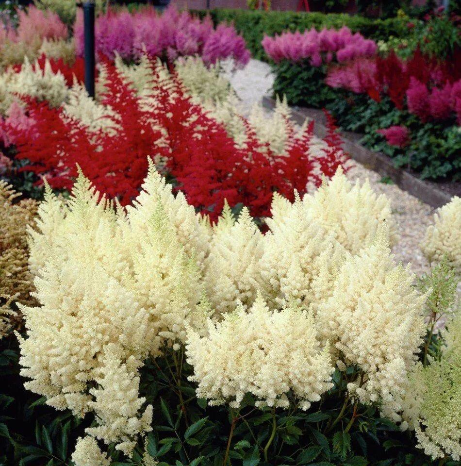Многолетние цветы для урала: что посадить в северных краях?