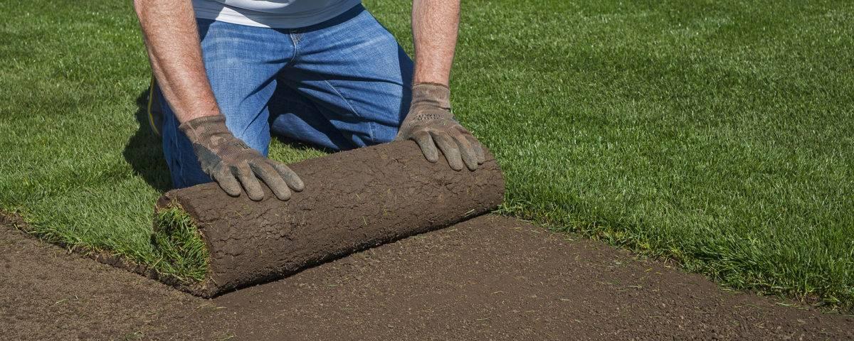 Рулонный газон: устройство, уход и технология укладки своими руками |