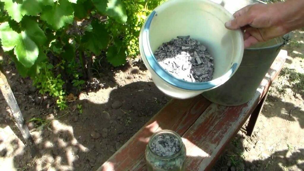 Чем подкормить виноград: во время наливания ягод, в период плодоношения