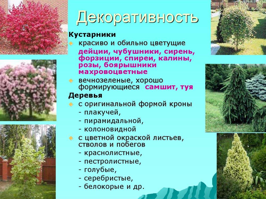 Декоративные кустарники для дачи: популярные виды, описание и фото