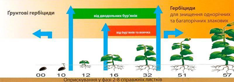 Гербицид «евролайтинг» для подсолнуха: инструкция по применению