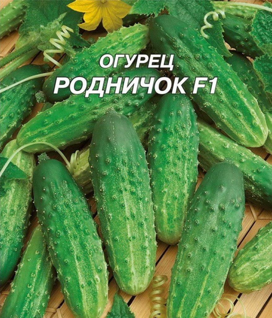 Огурец родничок f1: характеристика и описание сорта, выращивание и уход с фото