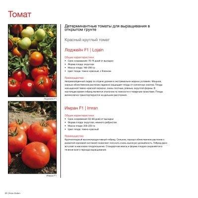 Томат лоджейн f1 - описание и характеристика сорта