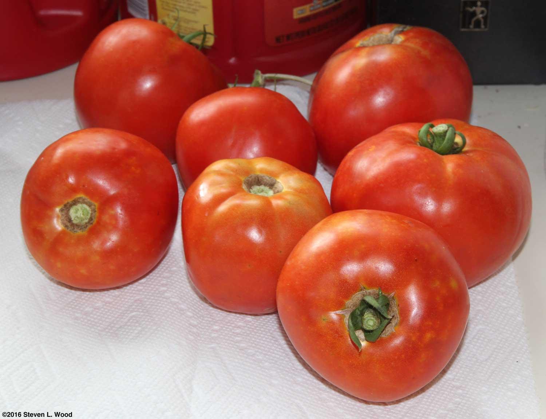 Томат белле f1: описание, агротехника, отзывы