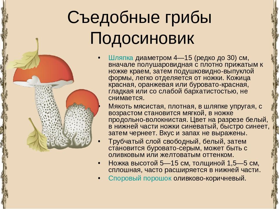 Царский (цезарский) гриб: описание и особенности сбора