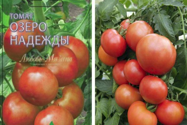 7 лучших гибридов томатов от компании ильинична