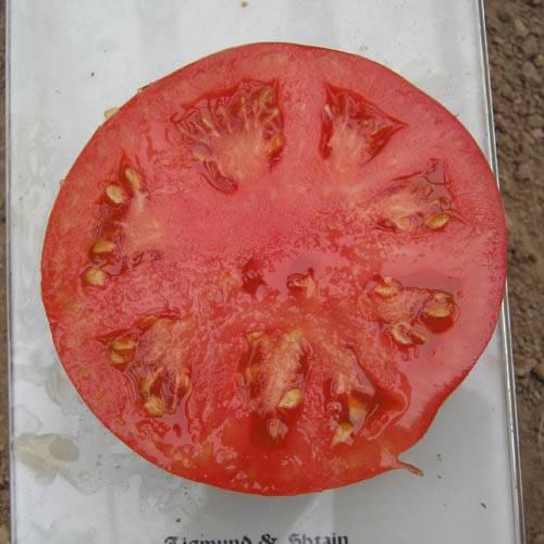 Детерминантные сорта томатов - описание и особенности выращивания