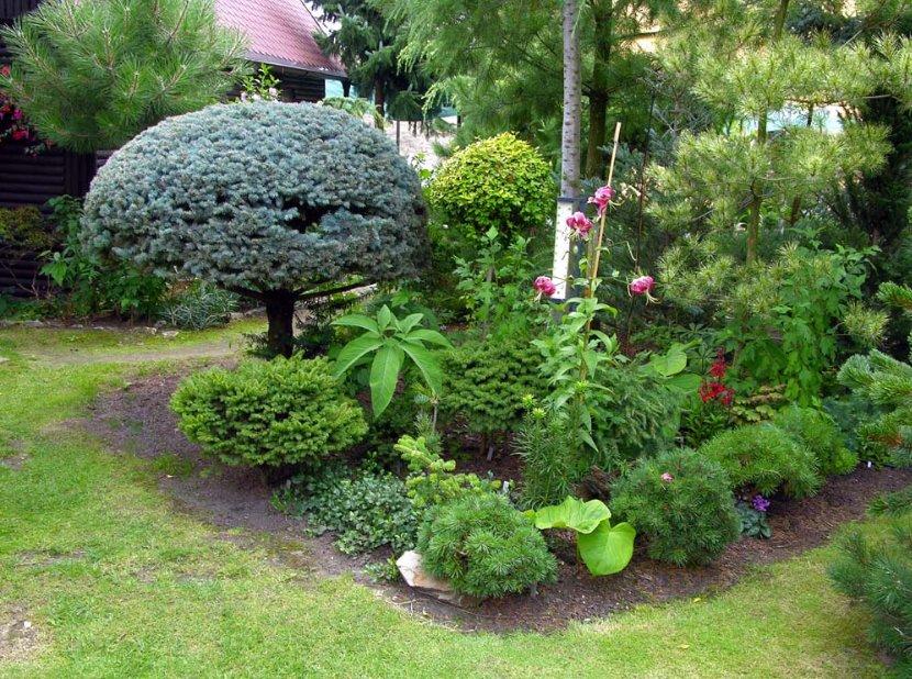 Низкорослые деревья для озеленения ландшафтного дизайна: сорта, виды и описание