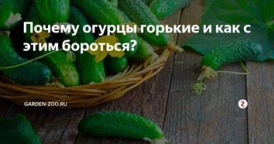 Почему огурцы горькие? как предотвратить накопление горечи в огурцах? — ботаничка.ru