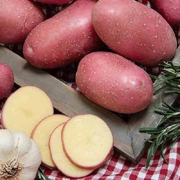 Картофель хозяюшка: описание сорта, фото, отзывы о вкусовых качествах и сроках созревания, особенности хранения и выращивания, характеристика урожайности