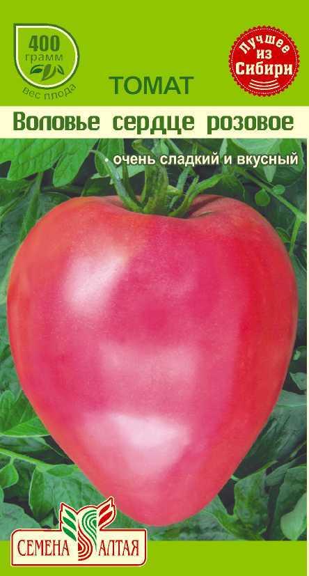 Помидоры воловье сердце: урожайность и особенности выращивания