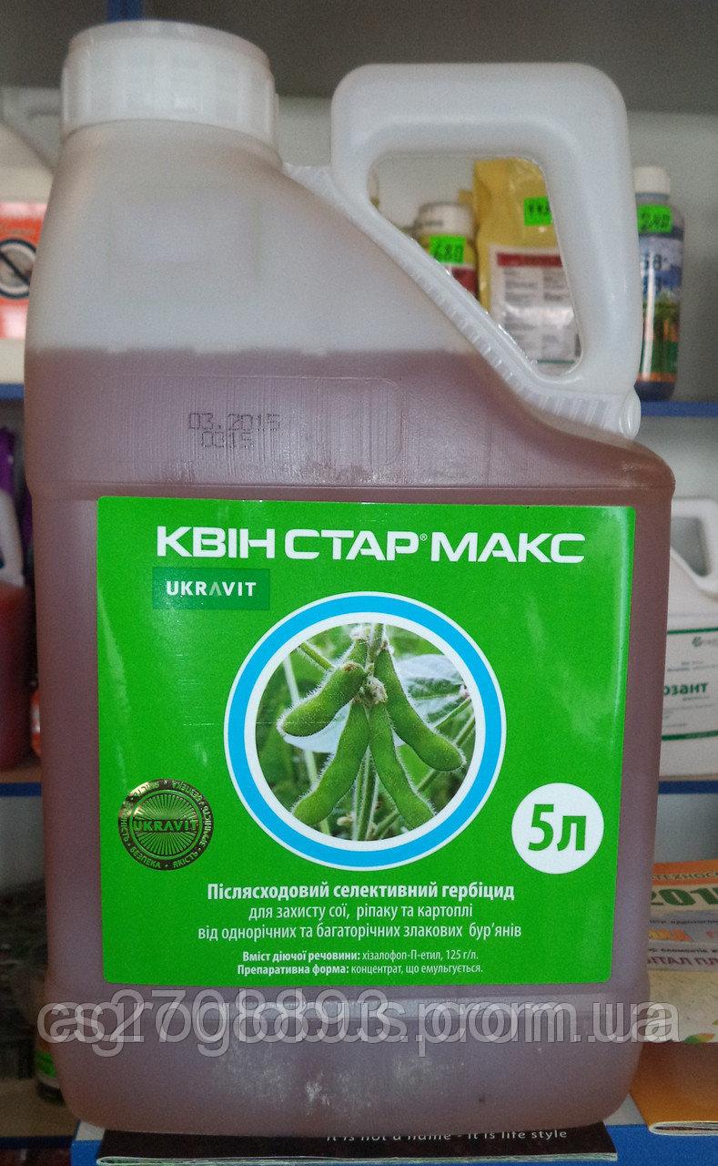 Возделывание подсолнечника по технологии экспресс | sativa.su