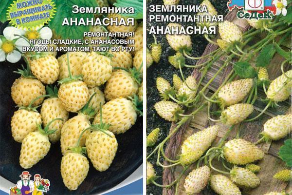 О сорте клубники ананасная: описание сорта, агротехника выращивания