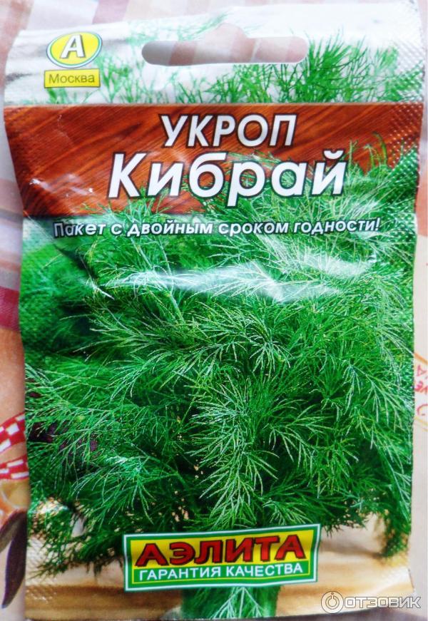 Укроп кибрай: описание сорта, отзывы, правила выращивания и ухода с фото