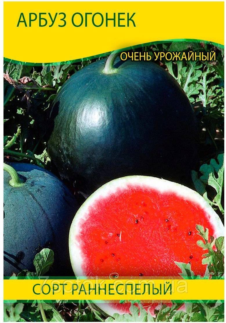Выращивание арбузов и уход за ними, в том числе в открытом грунте, а также описание сортов с характеристикой и отзывами, фото и видео
