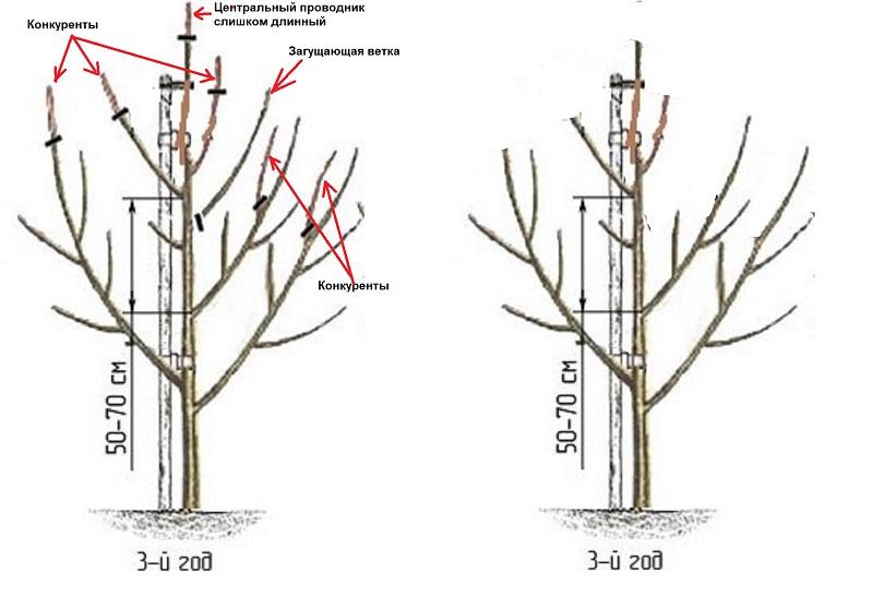 Принципы и виды омолаживающей обрезки для старых яблонь