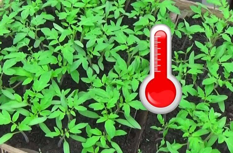 Какая температура должна быть в теплице для рассады: оптимальная температура (таблица)