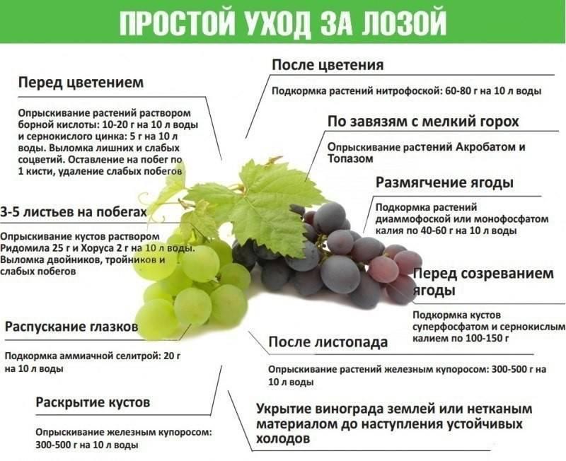 Подкормка смородины весной: чем подкормить для хорошего урожая, как правильно