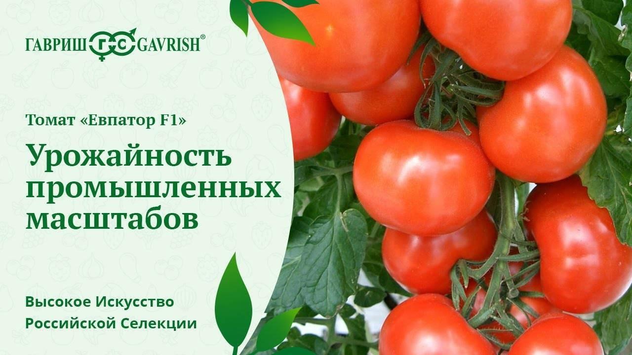 Характеристика и описание сорта томата евпатор, его урожайность - всё про сады