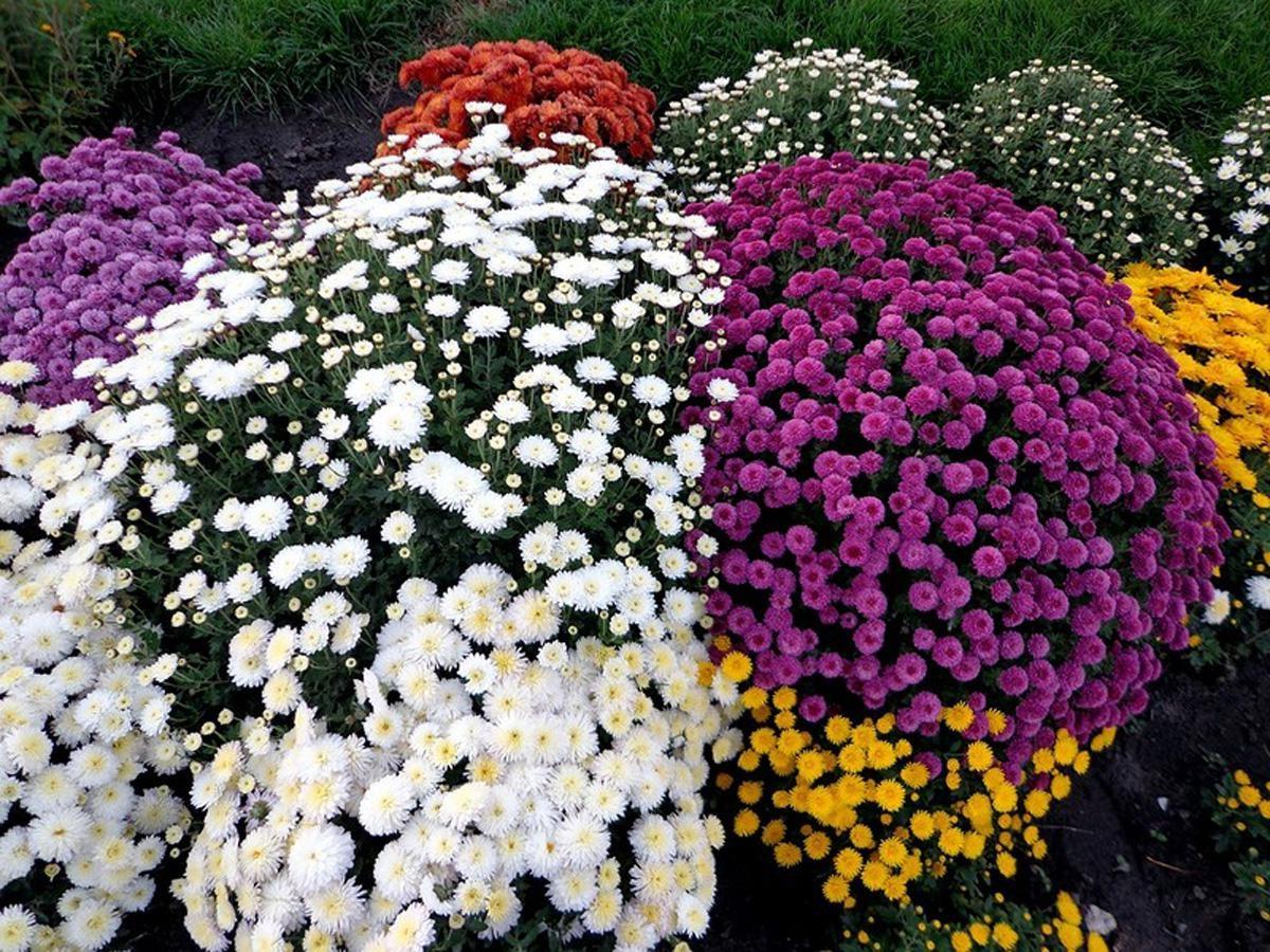 Многолетние цветы для урала цветущие все лето