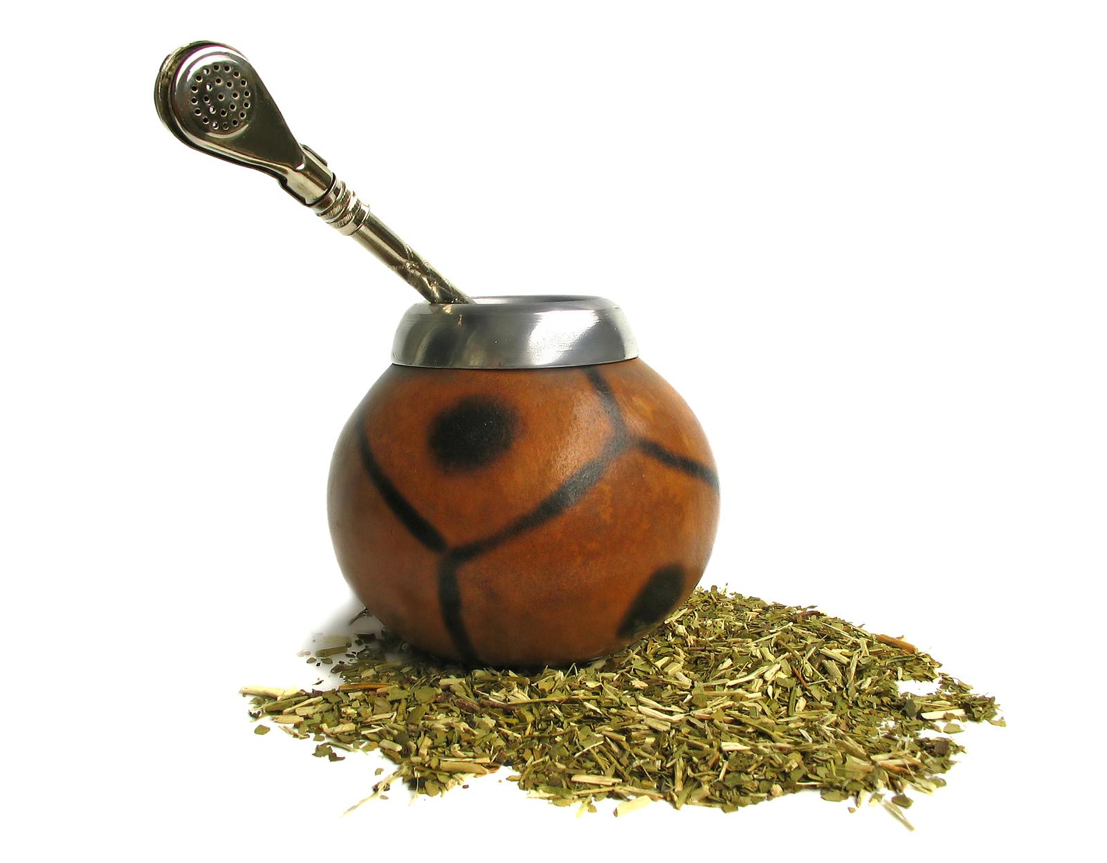 Падуб парагвайский: чай из листьев в тыкве, из чего парагвайцы делают сосуд для напиток мате, полезные свойства растения