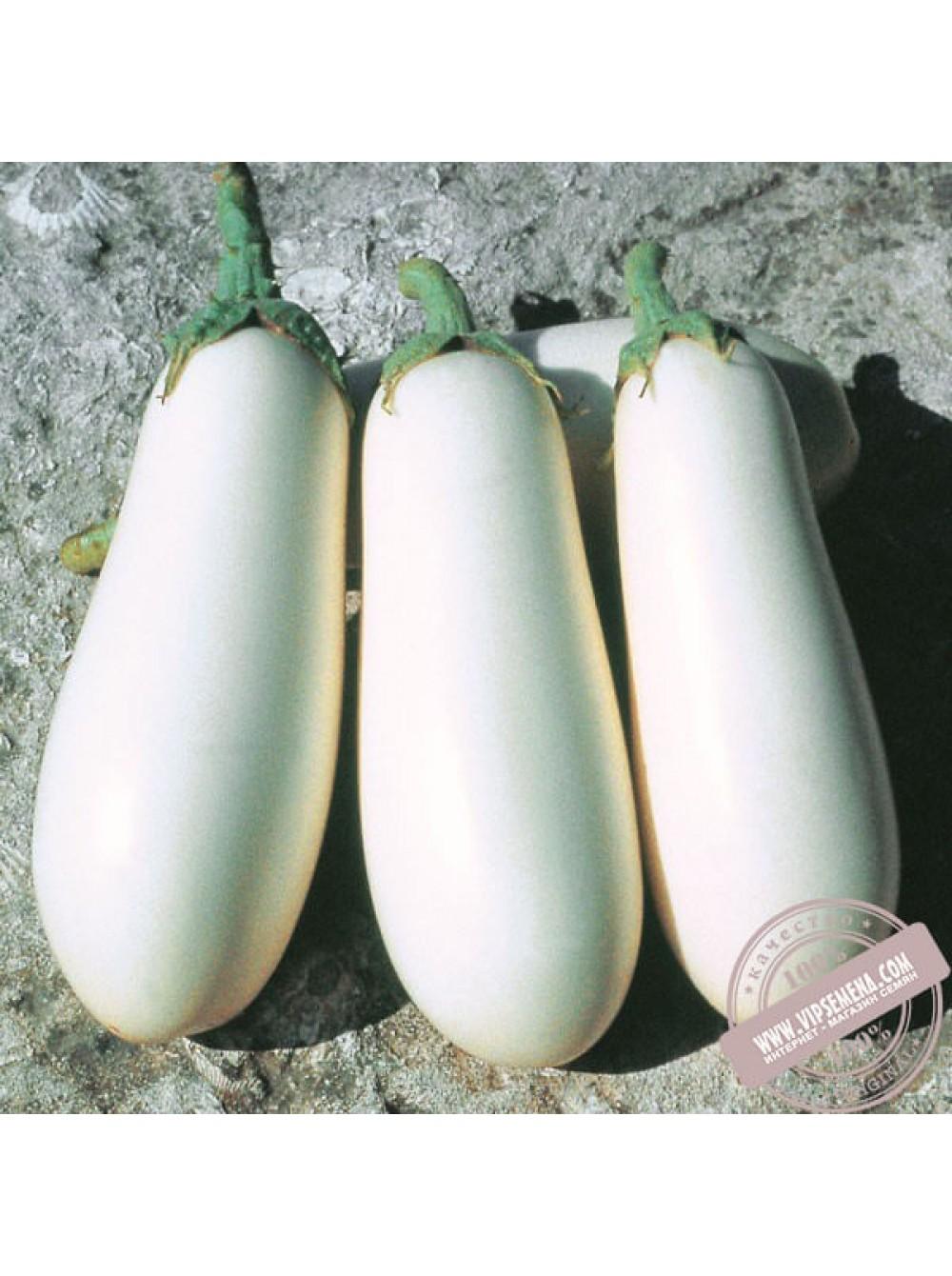 Баклажан бибо: описание, отзывы, урожайность