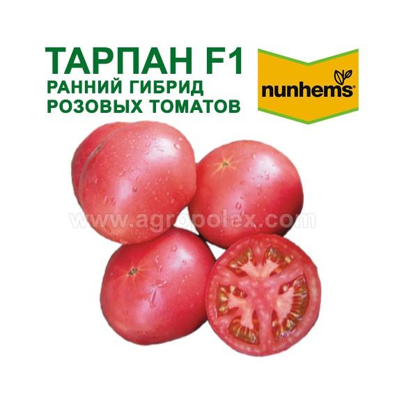 Сорт томата «фунтик f1»: описание, характеристика, посев на рассаду, подкормка, урожайность, фото, видео и самые распространенные болезни томатов