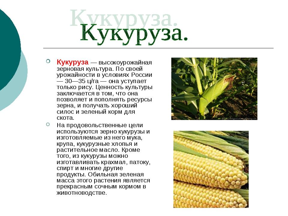 Кукуруза: ботаническое описание и происхождение культуры
