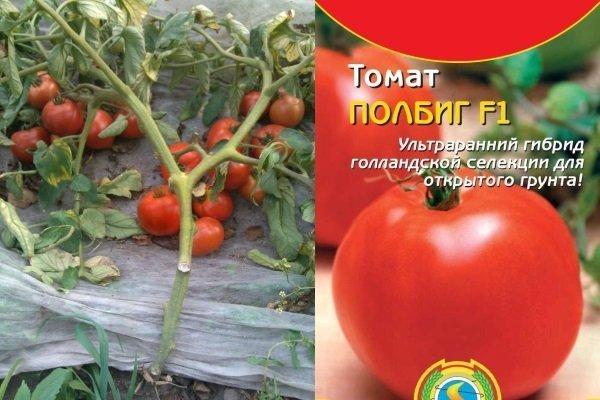 Описание, характеристика, посев на рассаду, подкормка, урожайность, фото, видео и самые распространенные болезни томатов сорта «полбиг f1».