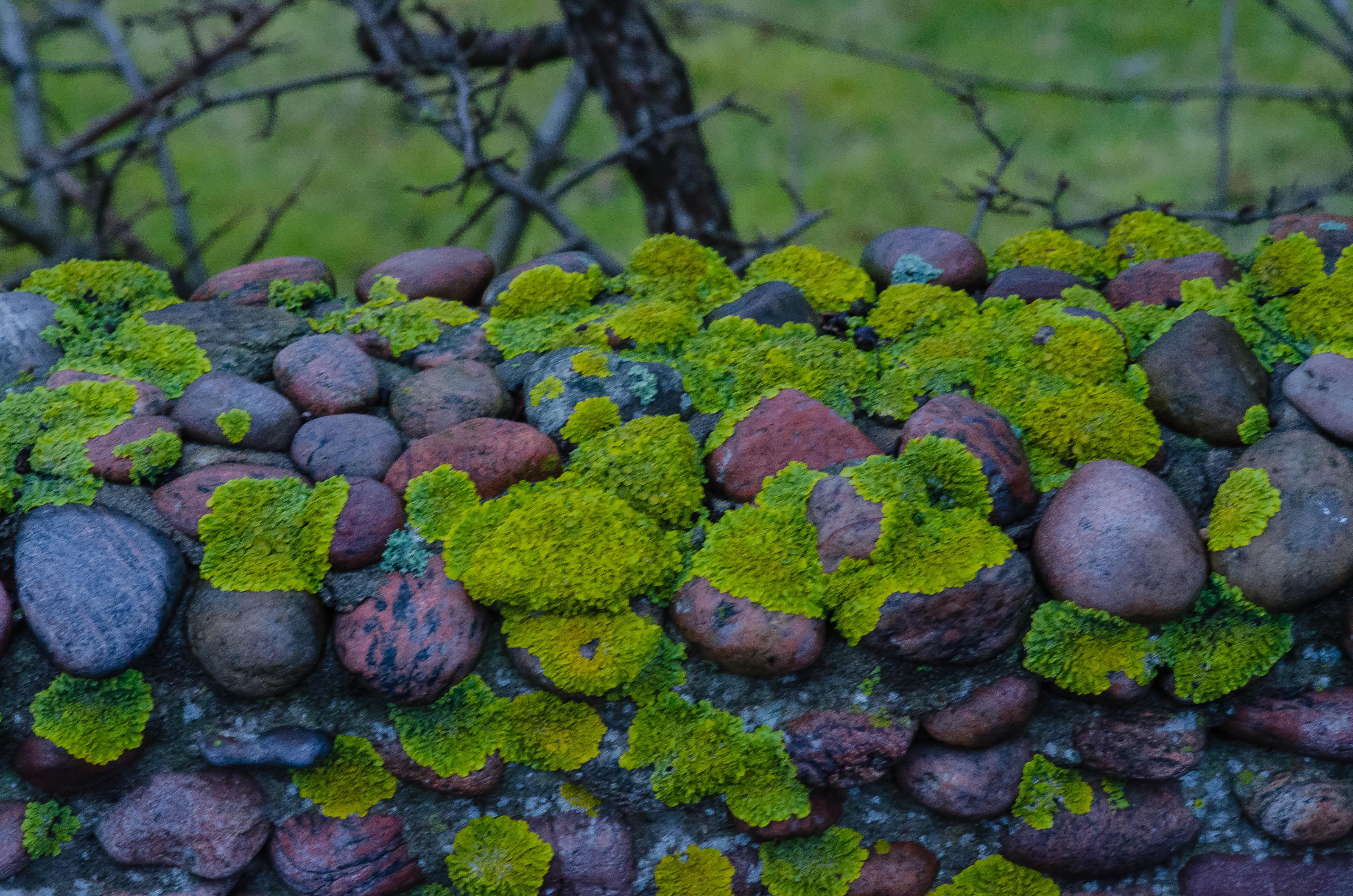 Что делать, если появились наросты ввиде мха и лишайника на деревьях в саду | ninapozyabina.ru